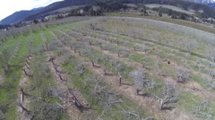Aerial View: Newly Grafted Apple Trees In Orchard Stock Footage