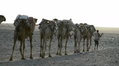 Camel caravans carrying salt through the desert in the Danakil Depression Stock Footage