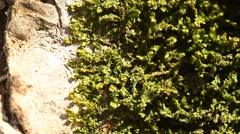 Stock Video Footage of Moss on the tree