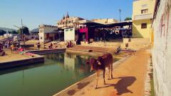 Cow roams along the ghats of Pushkar Lake, India Stock Footage