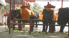 Elephant Camp in the Ayutthaya Historical Park, Thailand Stock Footage