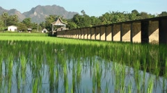 Rice fields and bridge with motorcycle,Hpa-An,Burma Stock Footage