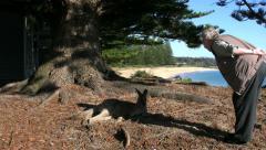 Australia Murramarang kangaroo is approached by woman Stock Footage