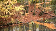 Autumn foliage and water stream Stock Footage