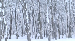 Snowy forest in Aomori Prefecture, Japan Stock Footage