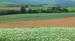 Wheat Field, Hokkaido, Japan Stock Footage