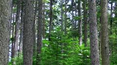 Forest in Hokkaido, Japan Stock Footage
