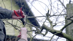 Person cut away tree branch 4K Stock Footage