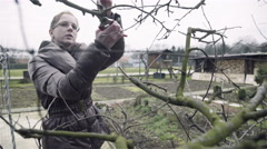 Woman on garden pruning branches 4K Stock Footage