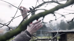Cutting parts of branches before blooming 4K Stock Footage