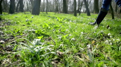 Person legs walk through green glade picks up snowdrops 4K Stock Footage