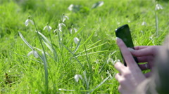 Photographing snowdrops with mobile 4K Stock Footage