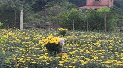 Women picking daisy on field Stock Footage