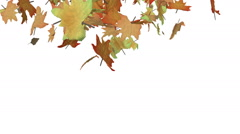Autumn leaves spiralling to the ground Stock Footage