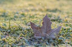 Hoar-frost on a fallen maple leaf - stock photo