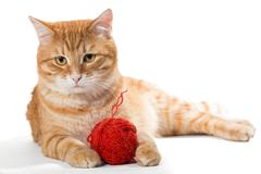 Orange cat and a sphere of red wool - stock photo