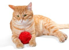Orange cat and a sphere of red wool Stock Photos