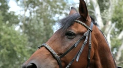 Horse portrait close-up Stock Footage