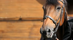 Head of beautiful horse close-up Stock Footage