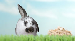Rabbit with long ears sitting on green grass Stock Footage