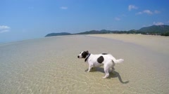 Cute Dog Running on the Beach. Slow Motion - stock footage