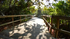 Nature walk boardwalk with trees Stock Footage