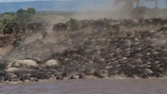 Wildebeests crossing the Mara River Stock Footage
