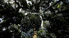 Dipterocarp Trees Kuala Lumpur Malaysia Southeast Asia Rainforest Stock Footage
