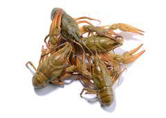 Crayfish isolated on the white background Stock Photos