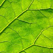 Stock Illustration of Vector green leaf macro background. EPS 10