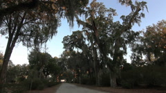 Gravel Road with Spanish Moss - stock footage