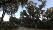 Stock Video Footage of Gravel Road with Spanish Moss