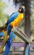 Big beautiful macaws Stock Photos