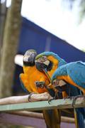 Macaws Stock Photos