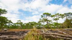 National phukradung Beautiful forest adventure tourism. Stock Footage