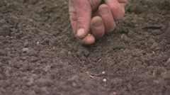 Planting parsnip seeds manually 2/2 Stock Footage