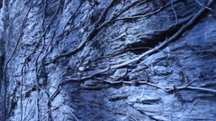 Roots on the Rock Stock Footage