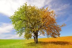 Season tree Stock Photos