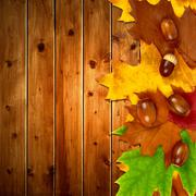 Autumn leaves with oak acorns  - stock photo