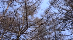 Naked Branches of a Tree Against Blue Sky Close Up, Panoraming. 4K UltraHD, UHD Stock Footage