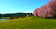 4K Spring Season on Farm, Green Field, Blue Sky, Pink Cherry Tree Flowers Stock Footage