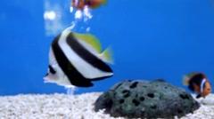 Aquarium fish close-up Stock Footage