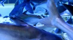 Aquarium fish close-up - stock footage