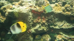 Underwater Colorful Fish Stock Footage