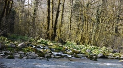 Mountain River among Trees and Stones in Gorge 3 Stock Footage