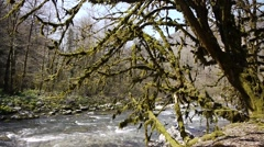 Stock Video Footage of Mountain River among Trees and Stones in Gorge 1