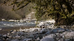 Mountain River among Trees and Stones in Gorge 4 Stock Footage