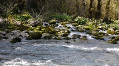 Mountain River among Trees and Stones in Gorge 5 Stock Footage