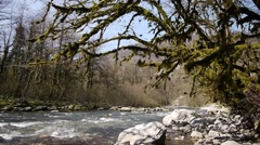 Mountain River among Trees and Stones in Gorge 6 Stock Footage