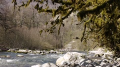 Mountain River among Trees and Stones in Gorge 7 Stock Footage